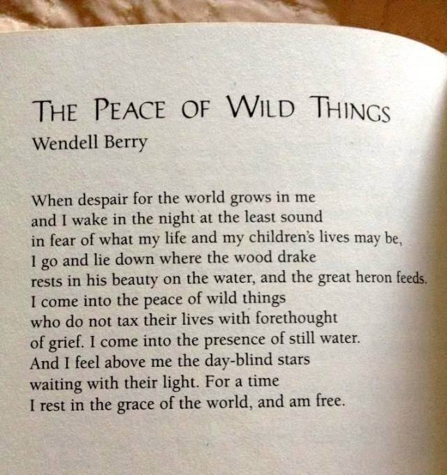 Peace of wild things....